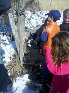 Our resident beaver tried maple sap